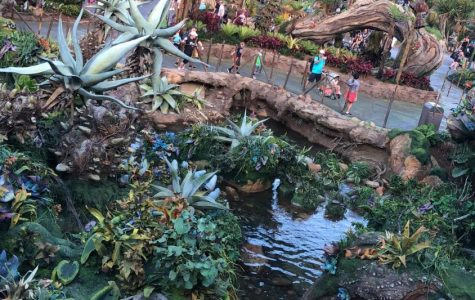 Disney's Animal Kingdom: Pandora