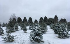OPINION: Real Christmas Trees, An Analysis