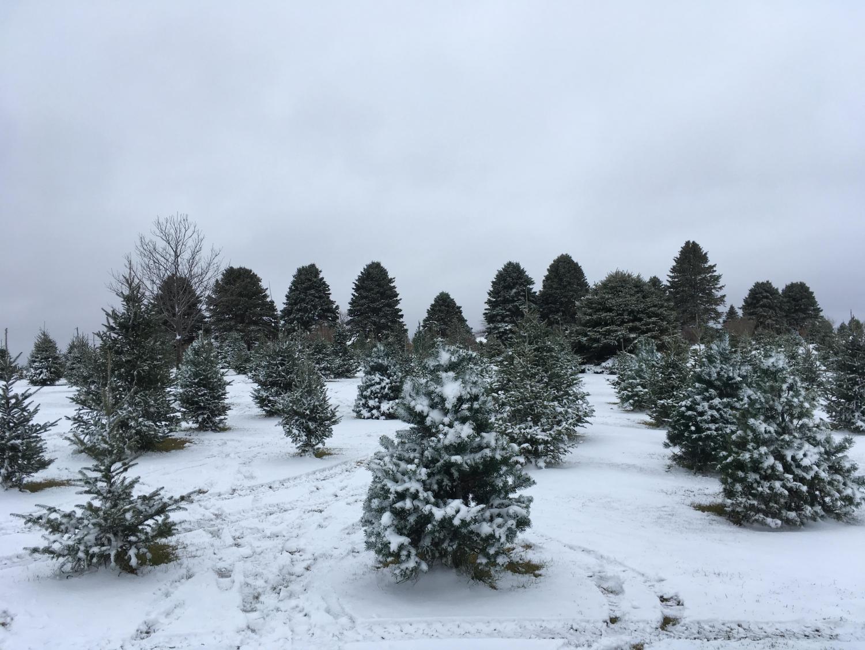 Harmony Christmas Tree Farm in Stuart, Iowa.