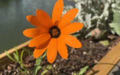 Opinion: Springtime Sadness