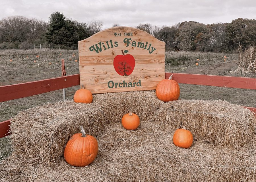 Local Business Spotlight: Wills Family Orchard